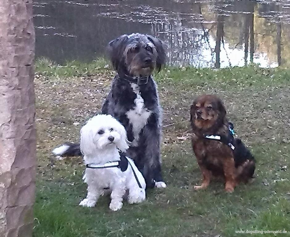 dogsitting_odenwald_0001