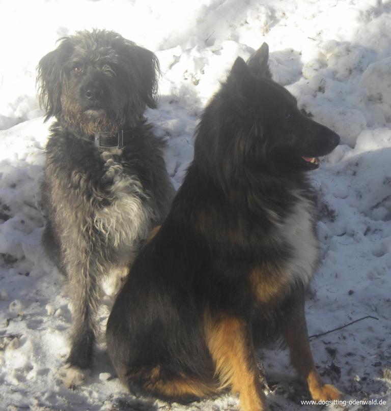 dogsitting_odenwald_0003_5
