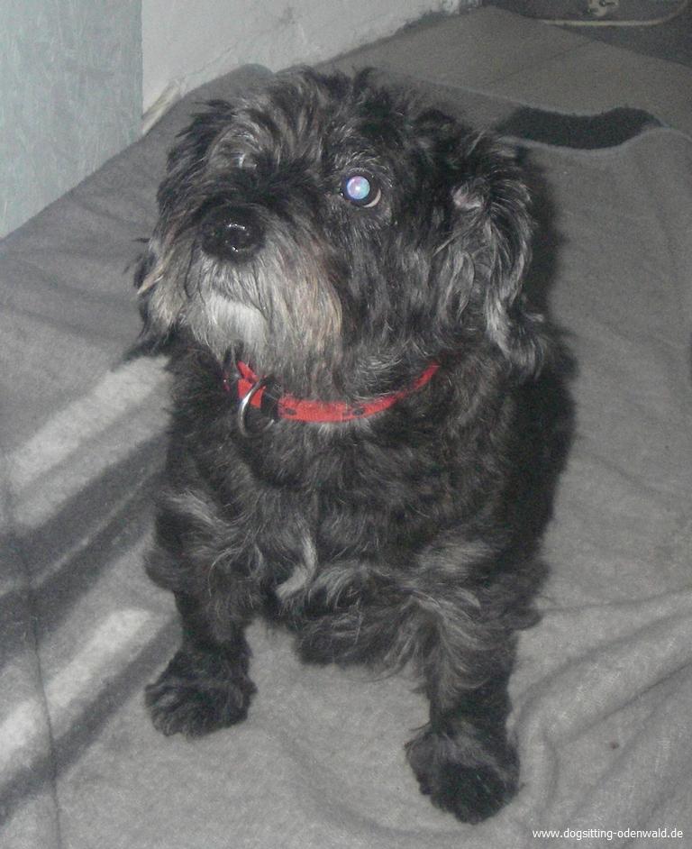 dogsitting_odenwald_0008_5