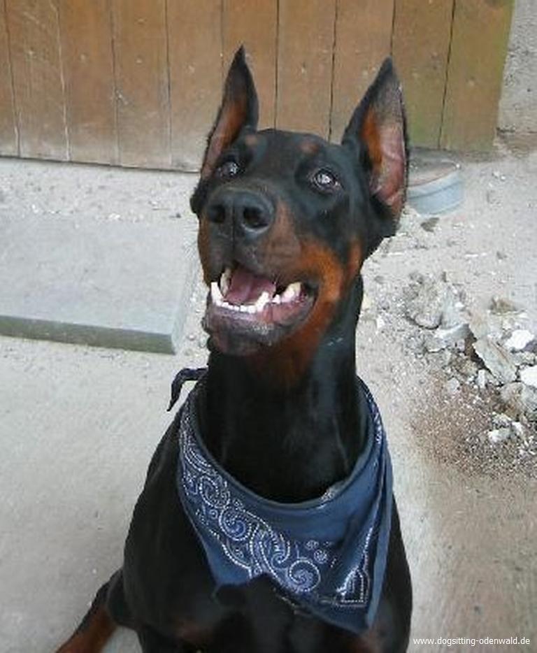dogsitting_odenwald_0013