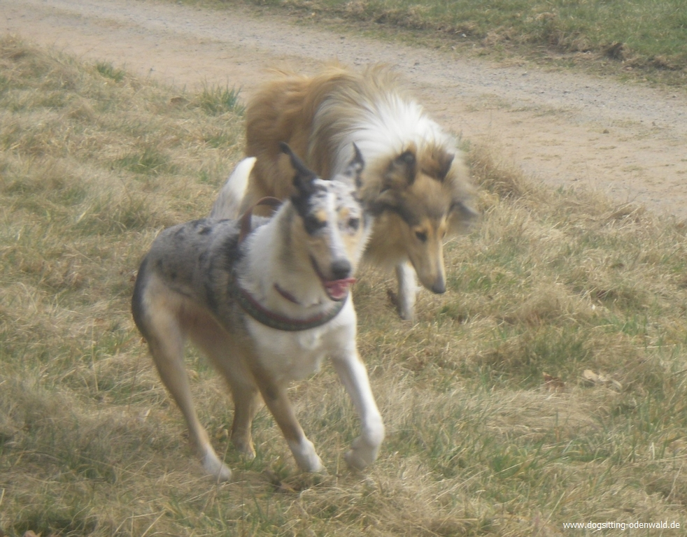 dogsitting_odenwald_0014_4