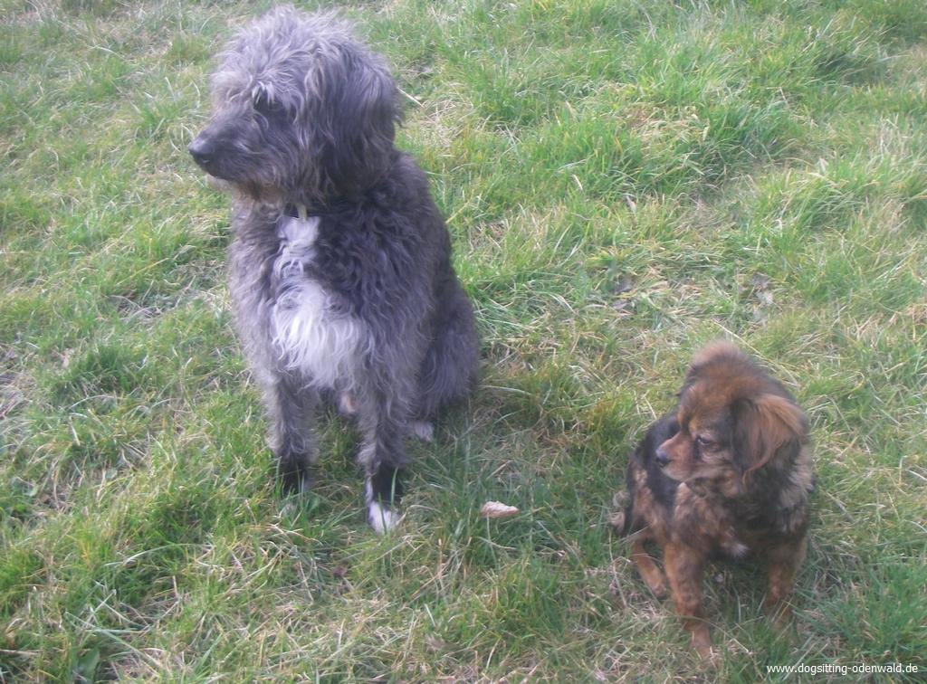 dogsitting_odenwald_0025_4