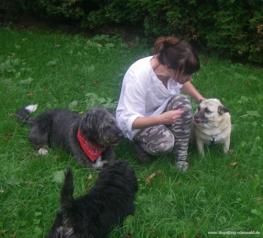 dogsitting_odenwald_0031_1