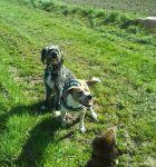 dogsitting_odenwald_0031